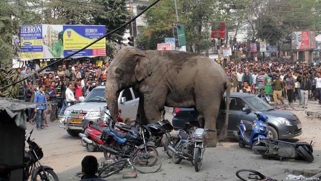无家可归的大象,最终会去哪里?